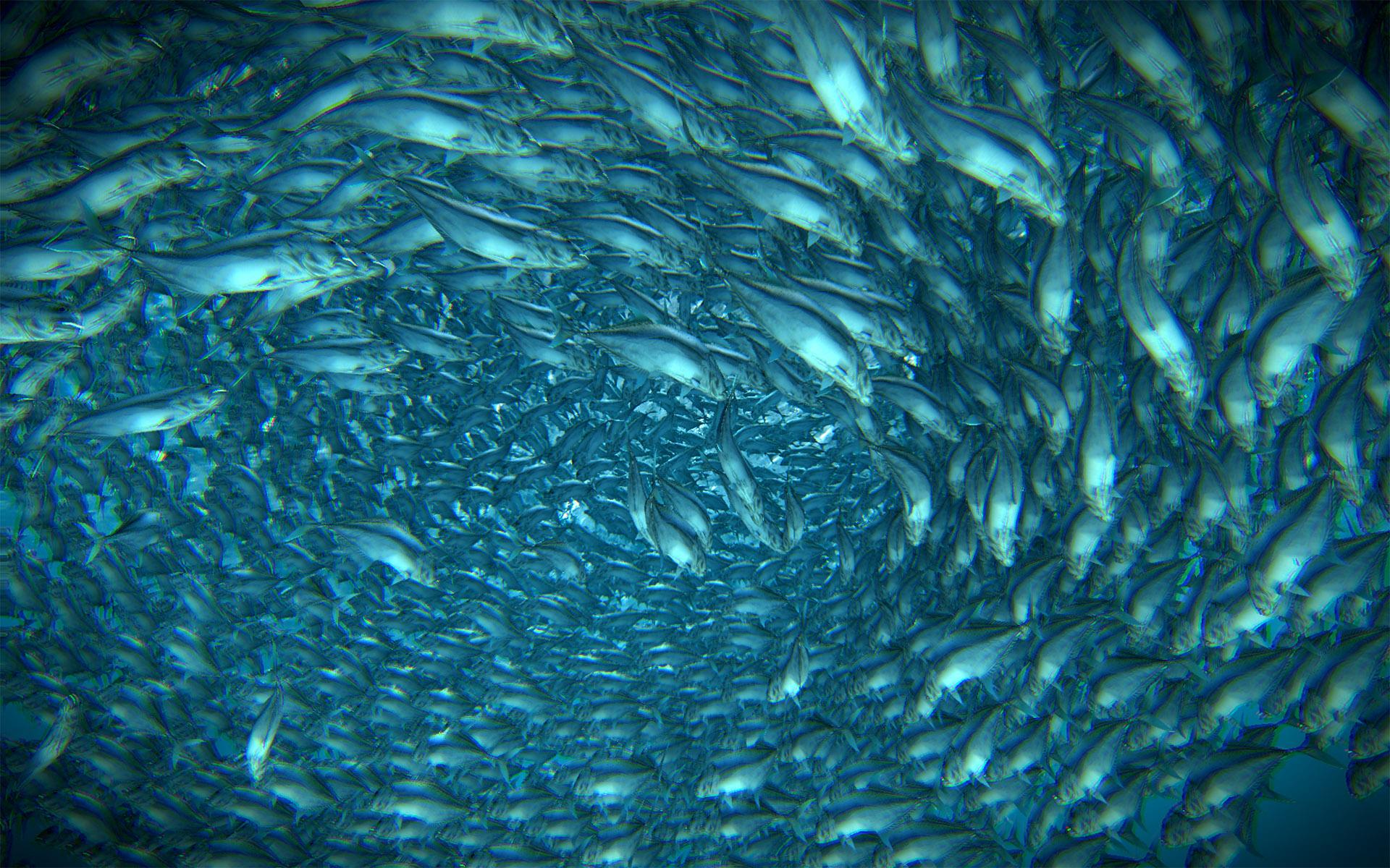 fishTornado_01